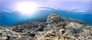 Great Barrier Reef (image: the Catlin Seaview Survey)