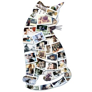 7D cat collage 2